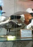 Musee oiseaux Trignac